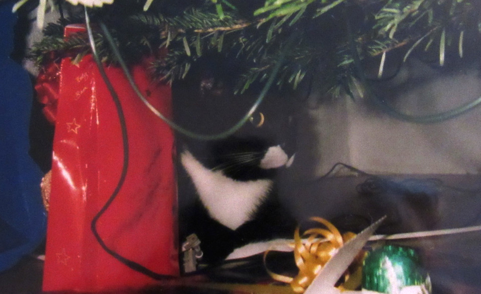 Bubi bei seinen Weihnachtsvorbereitungen