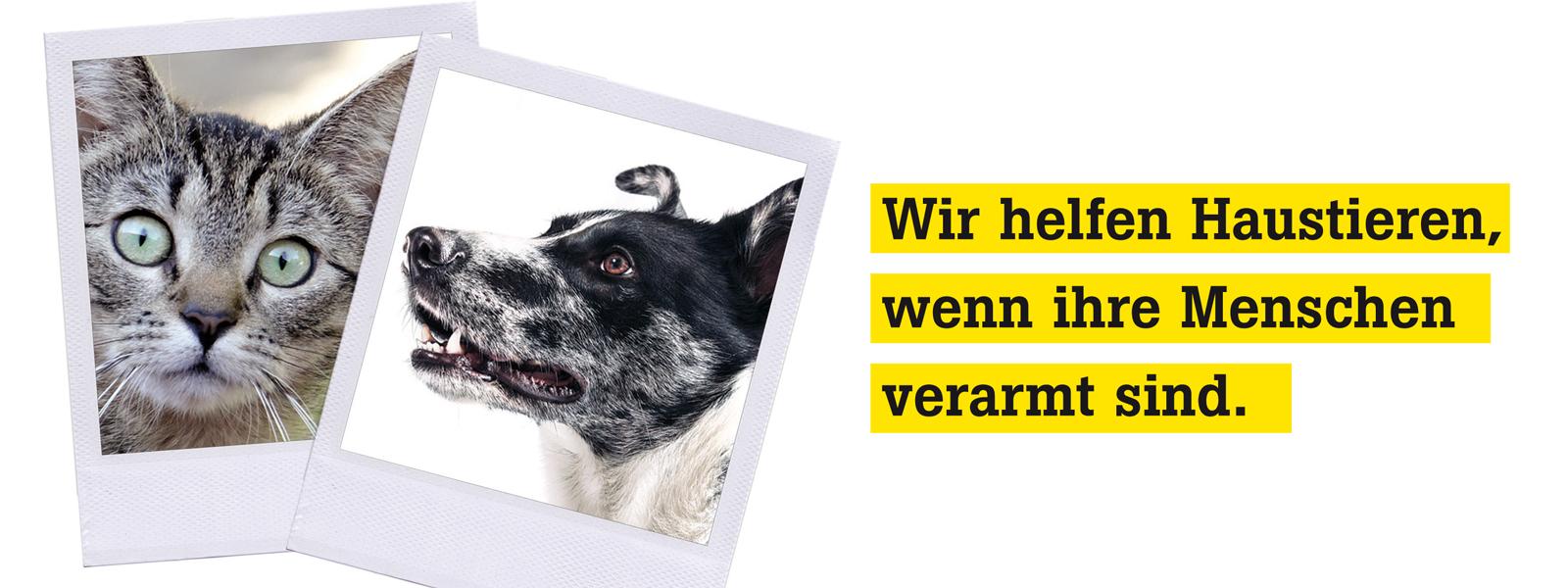 Hofer Tiertafel e.V.